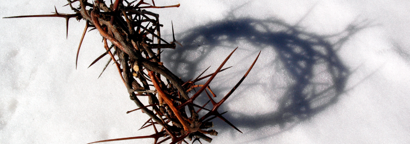 crown of thorns in the snow